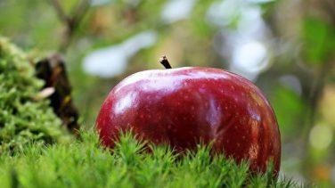 Elmanın En Güçlü 10 Faydası