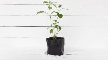 Evde Bitki Yetiştirme İşi