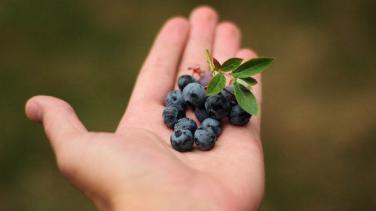 Enerji Veren Doğal Gıdalar