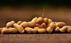 Fıstık Alerjisi: Nedenleri, Semptomları, Teşhis ve Tedavisi