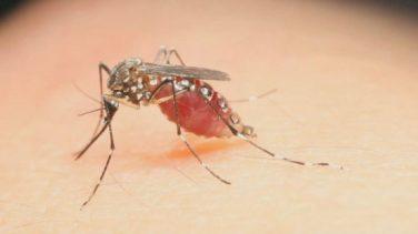 Zika Virüsü: Nasıl Yayılır, Semptomları ve Tedavisi