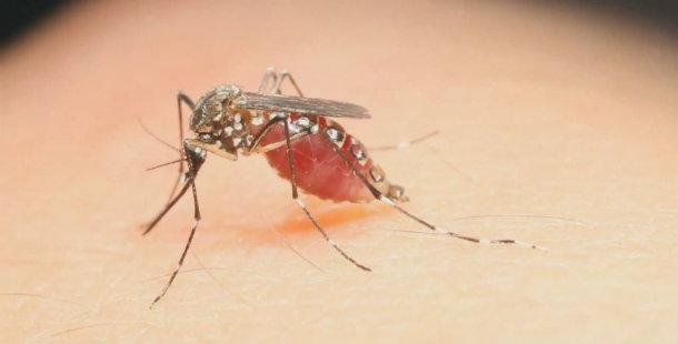 Zika Virüsü Semptomları
